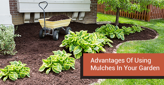 Advantages-Of-Using-Mulches-In-Your-Garden.jpg